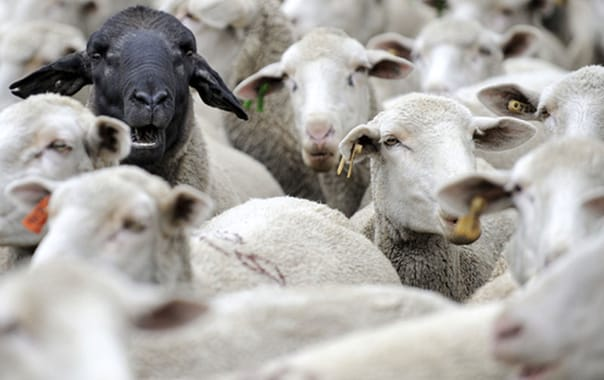 Is PR the black sheep of the communications family?